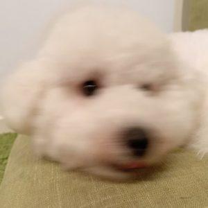ぶれた犬の画像