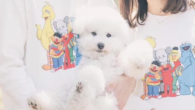 抱っこされる犬の画像