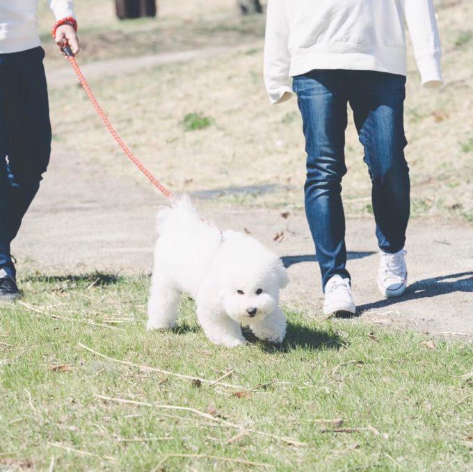 風の中勇ましく歩く犬