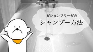 ビションフリーゼのシャンプー方法