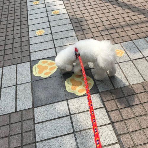 足跡をくんくんする犬