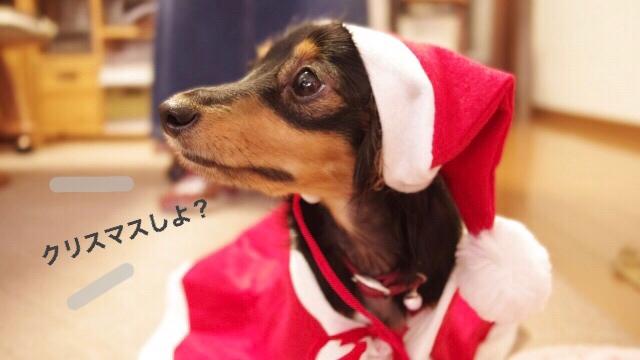 サンタさんのコスチュームを着た犬