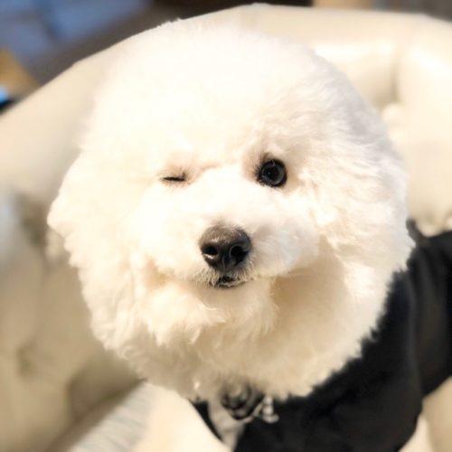 アフロカットの犬