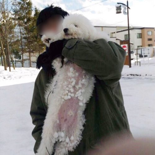 雪玉がついた犬