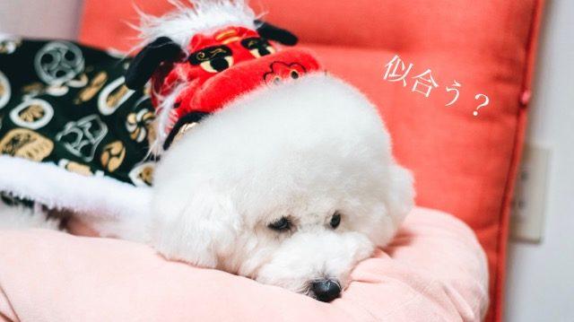 【犬用の獅子舞コート レビュー】お正月やハレの日はめでたい格好で祝おう
