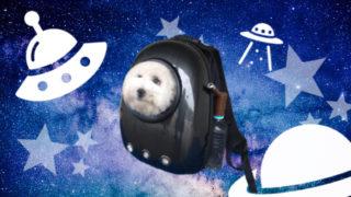 宇宙船型犬用キャリーバック